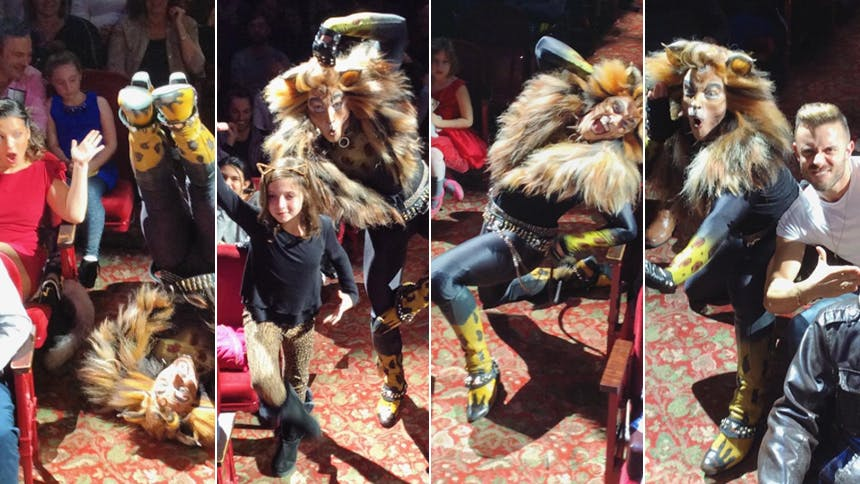 25  Official Rum Tum Tugger Grams That Give Us Major Life